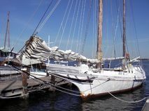 Skipjack do louro de Chesapeake Fotografia de Stock
