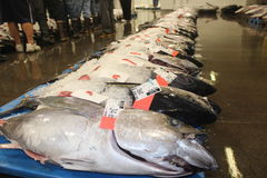 Skipjack tuńczyk Obrazy Stock
