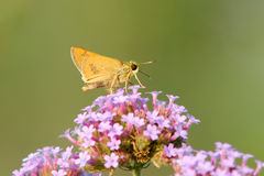 Skipper Stock Images
