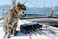 Skipper cat Stock Image
