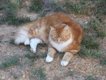 Skippy the Cat Royalty Free Stock Photos