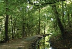 Skipton城堡森林 免版税库存图片