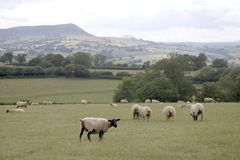 Skirrid sud du pays de Galles Photos stock