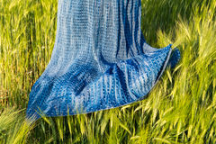 Romantic spring scene with skirt in barley field. Hordeum vulgare. Airy blue female dress in the green cornfield in beautiful sunny clear weather royalty free stock photo