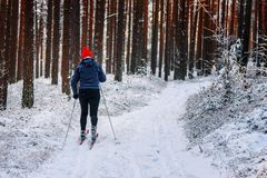 She skis through the forest stock photo