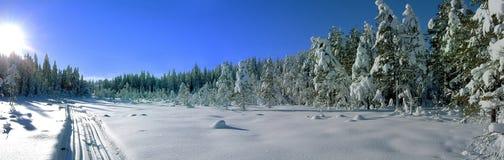skislope δάση Στοκ Φωτογραφίες