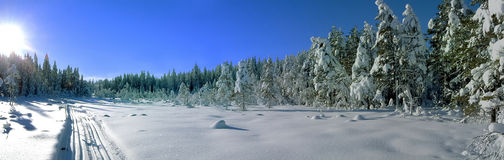 Skislope in the woods. On a sunny and clear winters day Stock Photos
