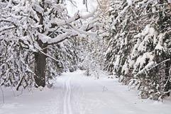 Skispur im Winterwald Lizenzfreies Stockfoto