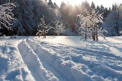 Skispur- und -winterbäume Lizenzfreie Stockfotos