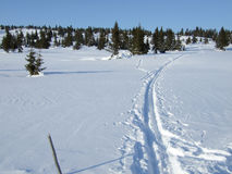 Skispuren Lizenzfreies Stockfoto