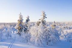 Skispuren im schneebedeckten Wald Stockfotos