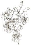 Skissa av blommanejlika vektor illustrationer