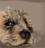 Skissa av en hund Arkivfoto