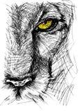 Skissa av en lion Arkivbild