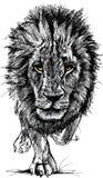 Skissa av en stor male afrikansk lion Arkivbild