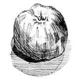Skissa av ett äppleäpple Royaltyfri Illustrationer