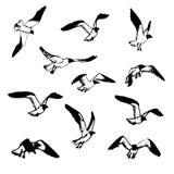Skissa av fåglar vektor illustrationer