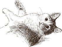 Skissa av skämtsam katt Arkivfoto