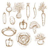 Skissa av sunda organiska grönsaksymboler Royaltyfri Bild