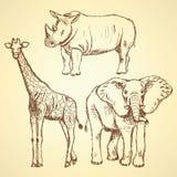 Skissa giraffet, elefanten, noshörningen, vektorbakgrund Arkivbild