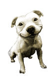 Skissa hunden i enkel bakgrund Arkivbilder