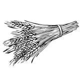 Skissa kärven av vete stock illustrationer
