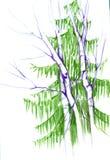 Skissa med gruppen av träd Björken sörjer, gran-trädet Färgpancil royaltyfri fotografi