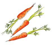 Skissa morötter på vit bakgrund vektor illustrationer