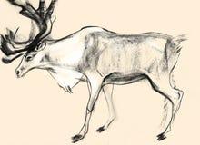 Skissa på papper av hjortar Arkivfoto