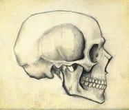 skissa skallen royaltyfri illustrationer