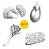 Skissa stilgrönsakuppsättningen Purjolök, aubergine, broccoli och majsmajsstycke vektor illustrationer