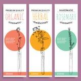 Skissa växt- vertikala baner med den organiska örtrosmarinvärdesaken för vektorillustration för mänsklig hälsa royaltyfri illustrationer