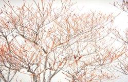 Skissa våren Arkivbild