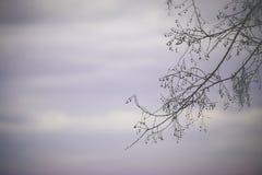 Skissa våren royaltyfri fotografi