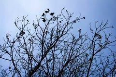 Skissa våren Royaltyfria Bilder