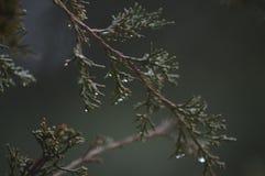 Skissa våren Arkivbilder