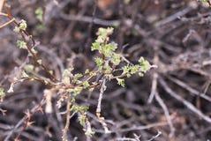 Skissa våren green leaves suddighet bakgrund Royaltyfri Bild