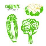 Skissad grönsakillustration av kål Royaltyfri Foto
