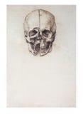 skissad skalle Arkivbilder