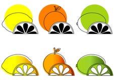 skissade citrusfrukter Royaltyfri Foto