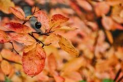 skissar Fotografering för Bildbyråer