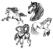 Skissar av fyra hästar royaltyfri illustrationer
