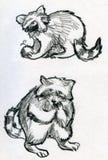 Skissar av tvättbjörnar Royaltyfri Bild