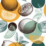 Skissar den sömlösa modellen för vektorn med utdragen orange frukt för färgpulverhanden, blommor och sidor Citrus bakgrund för ta vektor illustrationer