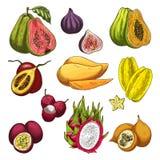 Skissar den tropiska gårdsprodukten för exotisk frukt uppsättningen Royaltyfri Foto