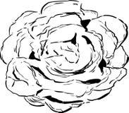 Skisserad teckning för Bibbgrönsallat Royaltyfri Bild