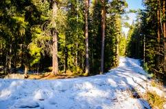 Skisteigung Lizenzfreie Stockfotos