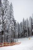 Skisteigung in einem schneebedeckten Wald Stockbild