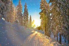 Skisteigung Rumänien Stockfotos
