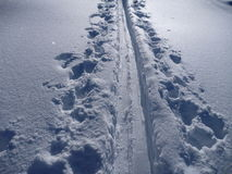 Skitouringssleep in witte sneeuw behandelde bergen Stock Afbeeldingen